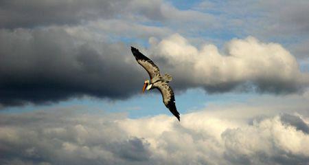 Beautiful Tulum Beach in the Yucatan - Pelicans fished th... by Dan Lee