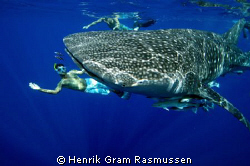 WhaleShark playing :o) We encountered this gentle giant u... by Henrik Gram Rasmussen