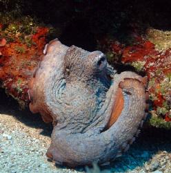 Octopus, Nikon D80, 35mm by Andy Kutsch