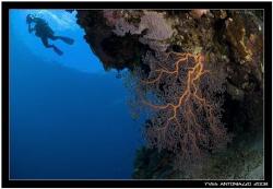 Wall dive in Kakaban island, Kalimantan  Fuji S5 Pro 10.5 mm by Yves Antoniazzo
