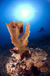 Sponge and diver. by Erika Antoniazzo