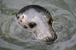 Female Grey Seal by Jim Garland