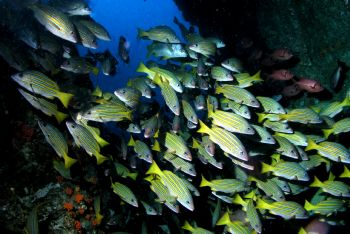 FISH,FISH AND MORE FISH..COCOS ISLAND COSTA RICA. FEBRUAR... by Charlie Foreman