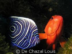 friends by De Chazal Louis