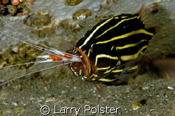 Dinner time, Ducomi pier, Dumageute, Philippines by Larry Polster