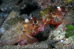 lip locked fishes - canon 350d by Carlos Munda