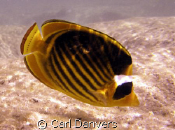 wonderful fish by Carl Danvers