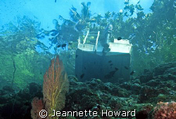 Solomon Islands on a shallow wall with great vis :) by Jeannette Howard