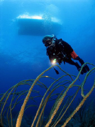 Diver in Vieques, PR. by Juan Torres