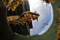 I was shooting our dock from under the water when a small... by David Heidemann