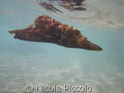 come una farfalla pentax W60 by Nicola Piccolo