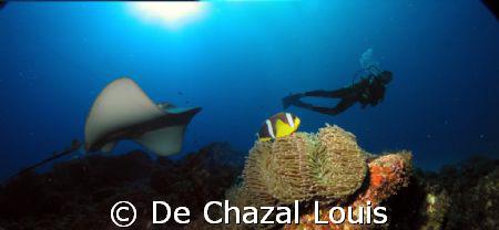 Lucky diver by De Chazal Louis