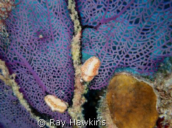 On the fan.  Took my time looking for small things while ... by Ray Hawkins