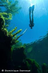 Yukatan cenotes snorkeling by Dominique Danvoye