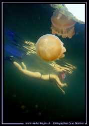 Diving the jelly fish lake in Palau with my wife... :O) .... by Michel Lonfat
