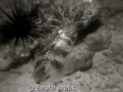 Squid at night , black and white with Canon S70 by Beate Krebs