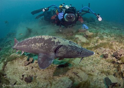 Mr H & Sturgeon.