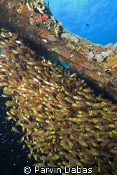 school of glass sweepers inside a wreck with an outside view by Parvin Dabas