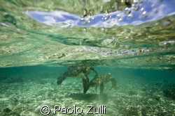 """i due innamorati""450d+10-22 canon by Paolo Zulli"