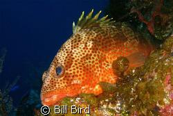 This guy was too lazy to swim away. by Bill Bird