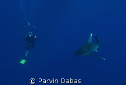 underwater photographer with oceanic whitetip by Parvin Dabas
