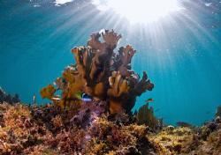 Snorkeling... by Juan Torres