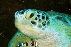 Turtle head shot. by Bill Bird