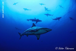 A Sea Plenty of Life by Victor Tabernero