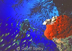 diver, sweepers and sponge by Geoff Spiby