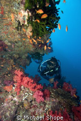 Diver swimming along reef in Fiji by Michael Shope