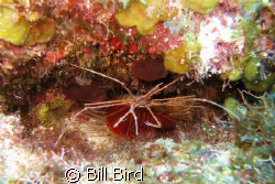 Taken with Canon S70 (7 megapixil) and built in flash. by Bill Bird