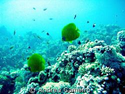 Underwater by Andrea Gamerro