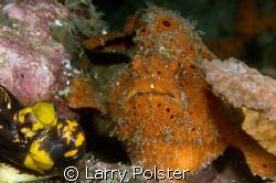 Nice orange frog, D300, 105VR by Larry Polster