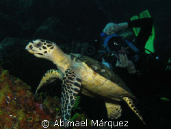 Sandy and The Turtle, Saba Island by Abimael Márquez