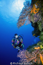 Diver and the wall at Palancar Gardens-Cozumel-Canon 5D 1... by Richard Goluch