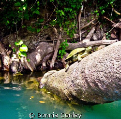 Kayak trip down the Guadalupe River Sept 2008.  Photo tak... by Bonnie Conley