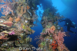 This is a shot of the King Posts on  a Japenese wreck at ... by Ken Thate
