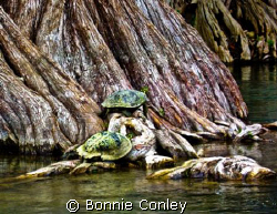 Kayak trip down the Guadalupe River at Canyon Lake Texas.... by Bonnie Conley