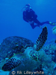 Turtle came out of the deep blue at Ras Mohammed December... by Rik Lilleywhite