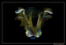 Squid shot taken during a night dive. Photo was taken rig... by Kay Burn Lim