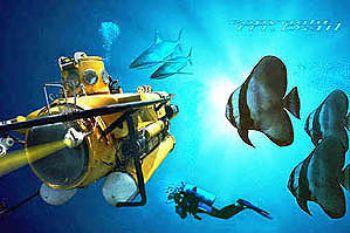 PNG - New Britain - Walindi - Batfish - COMPOSING > Subma... by Manfred Bail
