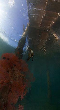 "Paradise pier - Manado. Look closely you'll see a diver ""... by John M Akar"