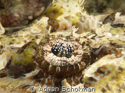 Close up of Crocodile Fish Eye... Olympus E-330 + 50mm Ma... by Adrian Schokman