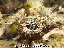 Close up of Crocodile Fish Eye... Olympus E-330 + 50mm Ma... by Adrian Schokman