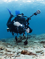 Cuttlefish & Diver by Nicholas Samaras