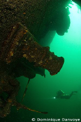 Diver swimming near the wreck of the Keystorm laying on 1... by Dominique Danvoye