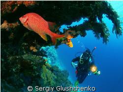 Red Fish by Sergiy Glushchenko