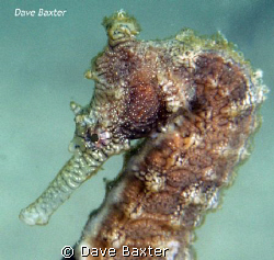 taken @ the ammo jetty by Dave Baxter