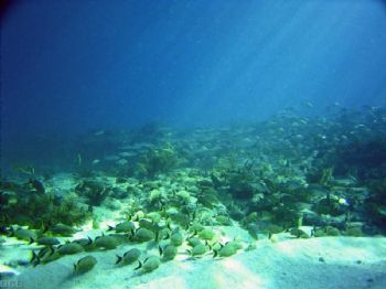 ReefScape / Pillar Reef, Key Largo, FL. Sea and Sea DX3000G by Dave Beedle