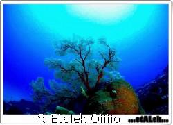 Sangalaki Indonesia by Etalek Oiiiio